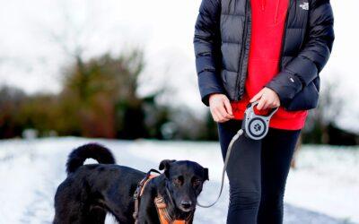 Pas på din hund med den perfekte hundesele